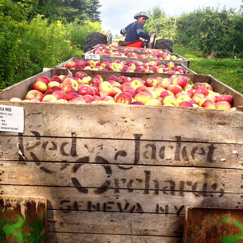 Red Jacket Orchards / New York
