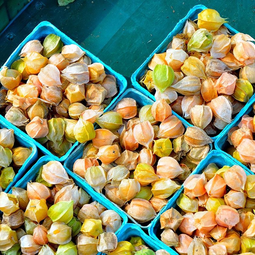 Rhode Island Farmers' Markets / Rhode Island