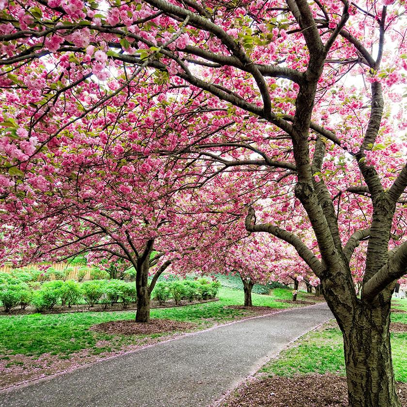Brooklyn Botanic Garden / New York